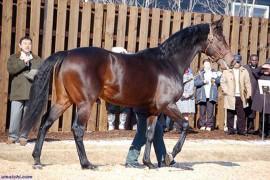 Дэлхийд хамгийн өндрөөр үнэлэгдсэн хурдан морьд