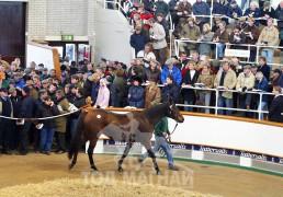 Теттерсоллс буюу хамгийн алдартай морьны дуудлага худалдаа