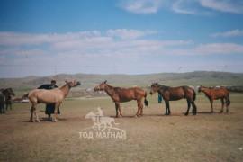 2001 оны наадамд шарга морь аймгийн гурави хурдалсаны дараа