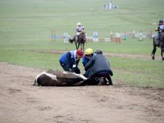 Их насны морьдын уралдааны үеэр гурван морь эндлээ