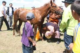 """""""Баатрууд тэнгэр"""" компанийн захирал Х.Цогтсайхан: Монгол төрийн наадамд дөрвөн үеэрээ морь айрагдуулсан хоёрхон айлын нэг нь манайх"""